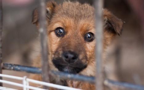 puppy-546x343