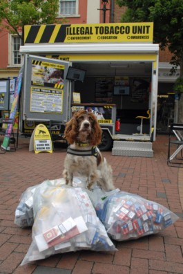 Scamp the illegal tobacco sniffer dog with the seized goods from the raid in Rugby